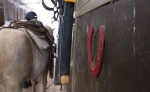 2-lezione-equitazione-parelli-natural-horsemanship